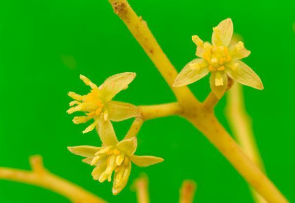 Những hiểu biết mới về sự tiến hoá của cây hạt kín đầu tiên