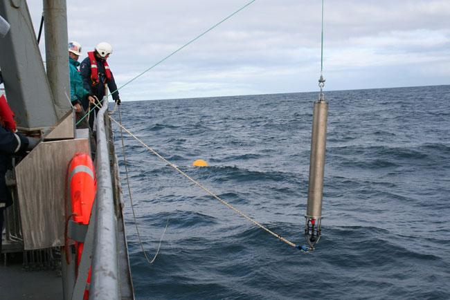 Phát hiện cá voi đầu bò gần Greenland