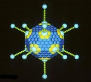 Virus mới phá hủy các tế bào ung thư nhưng không gây hại cho tế bào khỏe mạnh