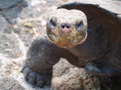 Muỗi tiến hóa đe dọa động vật hoang dã trên đảo Galapagos