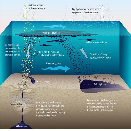 Khối lượng dầu đáng kinh ngạc rò rỉ xuống biển