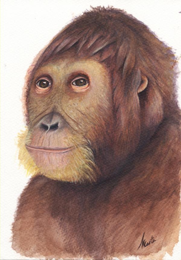 Phát hiện động vật họ người 12 triệu năm tuổi với nhiều đặc điểm khuôn mặt hiện đại
