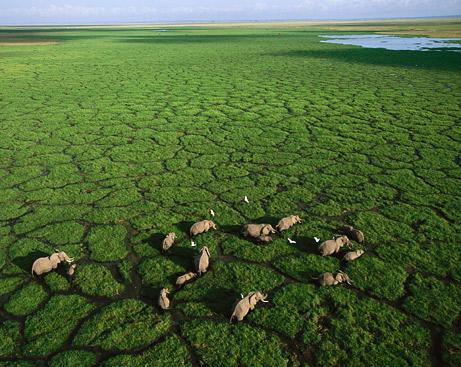 Khai thác đá có thể chấm dứt sự di trú của động vật hoang dã tại Kenya