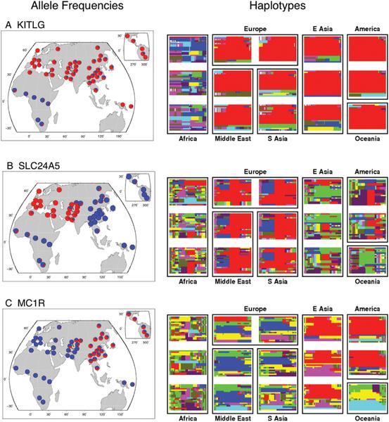 Lịch sử và địa lý tạo nên các khác biệt về gen ở người