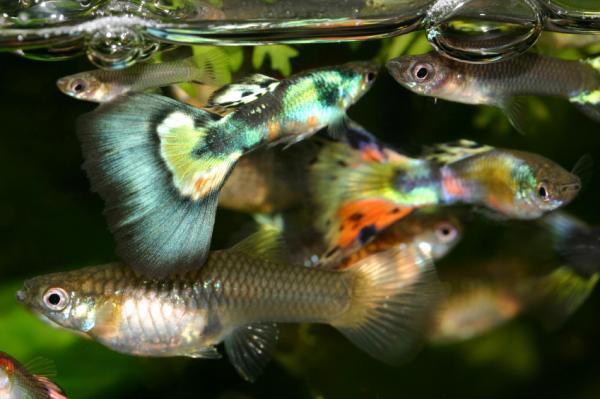 Tiến hóa nhanh để thích nghi với thay đổi môi trường