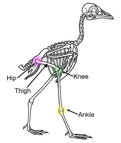 Nghi ngờ về mối liên hệ giữa chim và khủng long