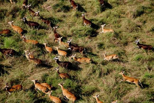 Các đợt di trú của động vật có vú kích thước lớn đang dần biến mất