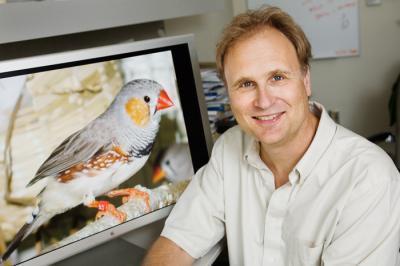Bằng chứng về ký ức trong não của chim biết hót