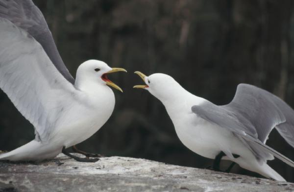 Nhận thấy khả năng tránh giao phối cận huyết ở loài chim