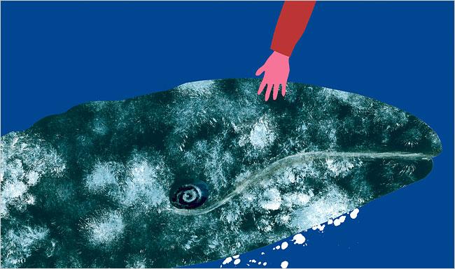 Theo dấu loài cá voi - Phán quyết của tòa án và điều chưa biết về cá voi (Phần 2)