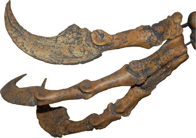 Phát hiện xương khủng long bụng phệ