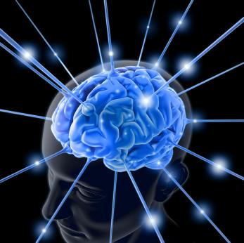 Vỏ não càng rộng, não càng thông minh?
