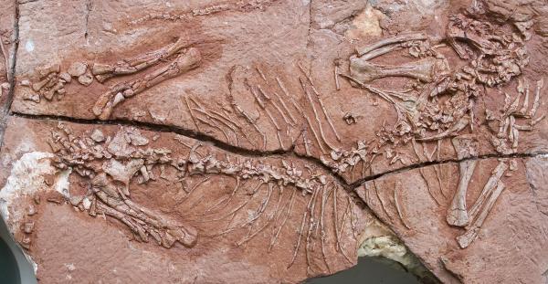 Loài vật có xương sống đầu tiên sống trên cây
