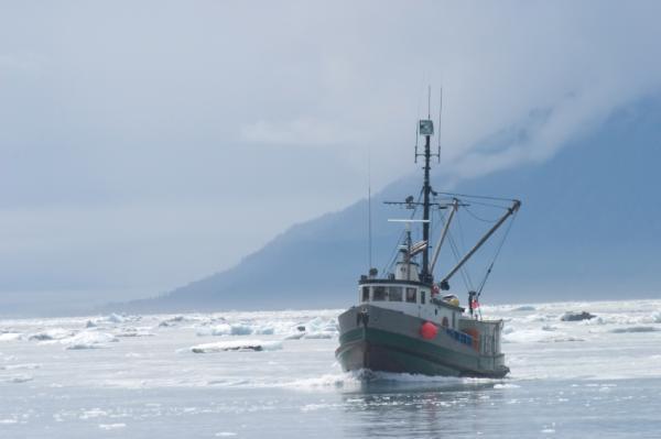 Hy vọng mới cho hệ sinh thái biển