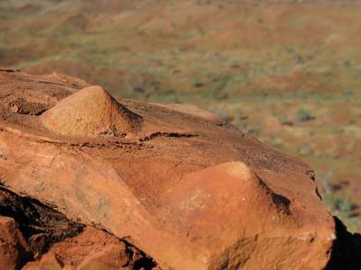 Các vi sinh vật cổ hình thành đá Stromatolite 34 triệu năm tuổi
