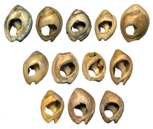 Vỏ sò niên đại 80.000 năm – đồ trang sức cổ xưa nhất trên trái đất