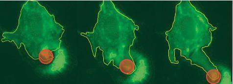 Tế bào chuột mã hóa gen được điều khiển bằng ánh sáng