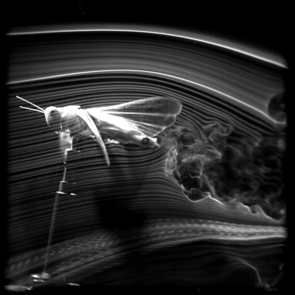 Mô phỏng bí mật khí động học của châu chấu