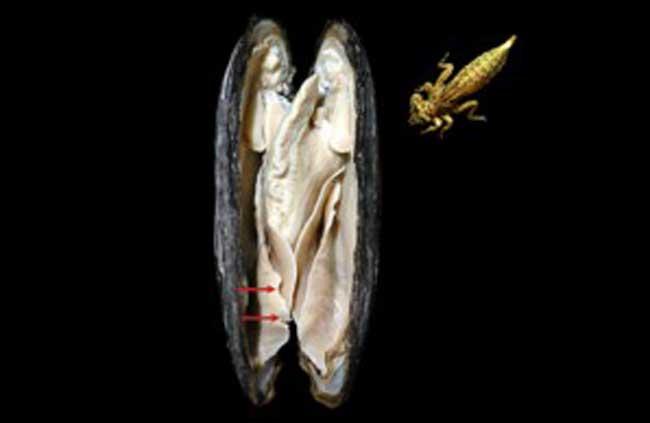 Chuồn chuồn tấn công trai sinh sản