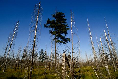 250 triệu năm trước, núi lửa xóa sổ toàn bộ rừng Trái đất