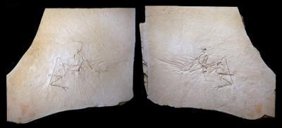 Khám phá chim Thuỷ cổ - phát hiện dấu hiệu đáng ngạc nhiên về loài khủng long