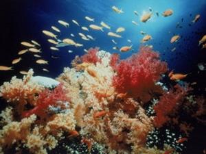 Biến đổi khí hậu làm sinh vật tiến hóa nhanh hơn