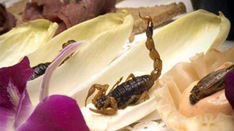 Côn trùng sẽ là nguồn thực phẩm tương lai?