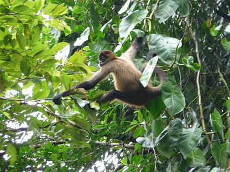 Phần lớn hệ sinh thái rừng nhiệt đới sẽ bị hủy diệt