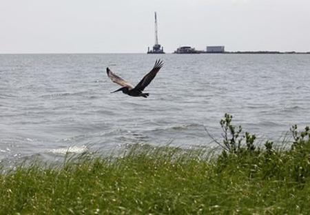 Đa số dầu vẫn 'trốn' trong vịnh Mexico