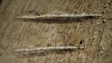 Loài người biết sử dụng công cụ từ 3,4 triệu năm trước