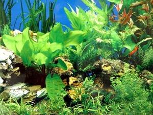 Nhật có thể chiết xuất Bio-ethanol từ rong biển