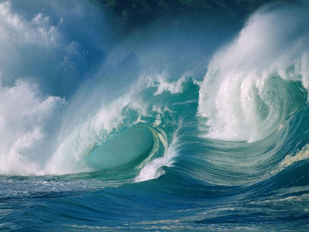 Sinh vật phù du góp phần tạo ra siêu bão