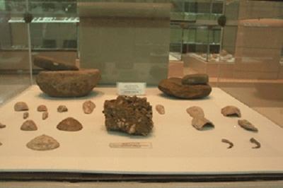 Thấy vỏ nhuyễn thể 5.200 tuổi ở Đồng Tháp Mười