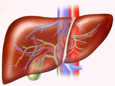Sức khỏe đời sống-Có thể tái tạo tế bào gan từ mẫu da của bệnh nhân
