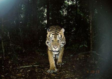 Hình ảnh những loài thú tưởng như đã tuyệt chủng