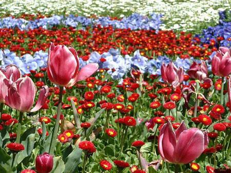 Thư giãn cùng hoa