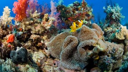 Sinh vật hoang dã lạ đe dọa biển châu Âu