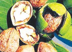 Phát hiện hoocmon sinh dục nữ trong thực vật