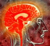 Nồng độ estrogen cao tác động trực tiếp đến não