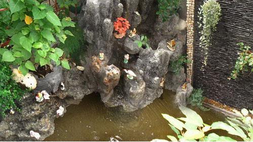Hòn non bộ và rạn san hô