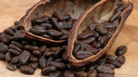 Giải mã 99% trình tự hệ gen của cây cacao
