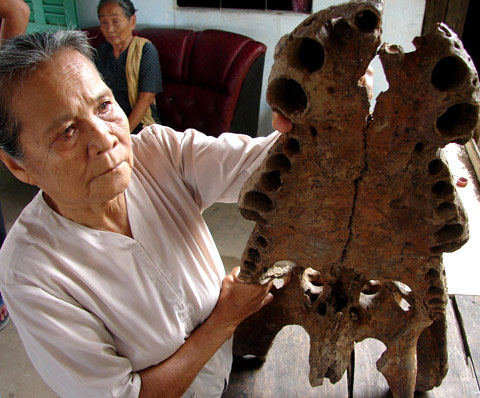 Sẽ giám định tuổi thọ xương hàm cá sấu khổng lồ