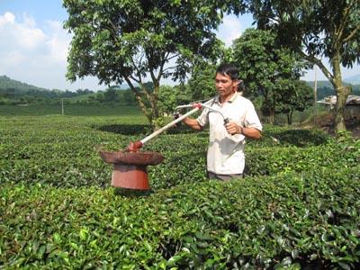 Một nông dân tự chế tạo máy hút sâu ở cây chè