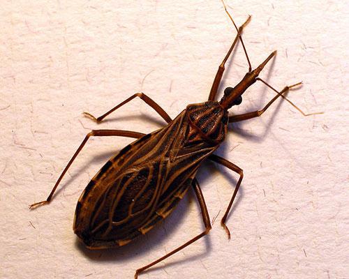 Tìm ra virus liên quan đến loại côn trùng hút máu