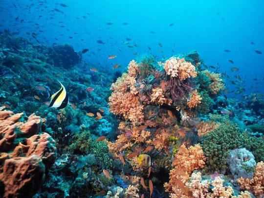 Thế giới có đại dương thứ 5 chưa được khám phá