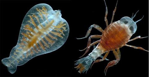 Phát hiện hơn 200 nghìn loài mới dưới đại dương