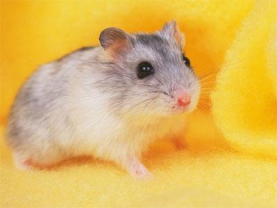 Thuốc trường sinh cho… chuột