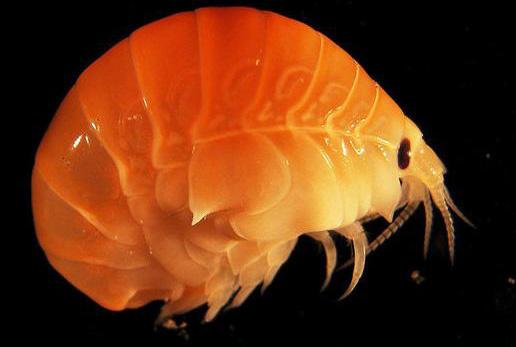 Hàng trăm nghìn loài sinh vật biển vẫn là bí mật
