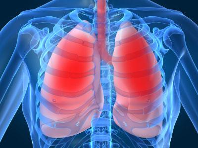 Tìm thấy cơ quan cảm thụ vị giác trong phổi người