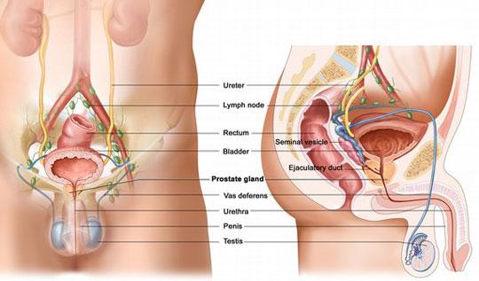 Xác định ung thư tuyến tiền liệt bằng xét nghiệm nước tiểu